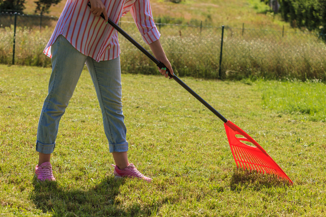 Woman raking leaves using rake. Person taking care of garden house yard grass. Agricultural, gardening equipment concept.
